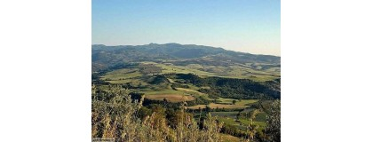 Vini Rossi>Sant'Antimo D.O.C.
